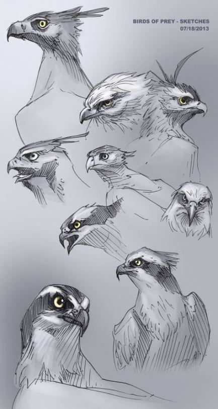 Best Bird Anatomy Inspiration Ideas En 2020 Dibujos De Animales Aprender A Dibujar Animales Bocetos De Animales