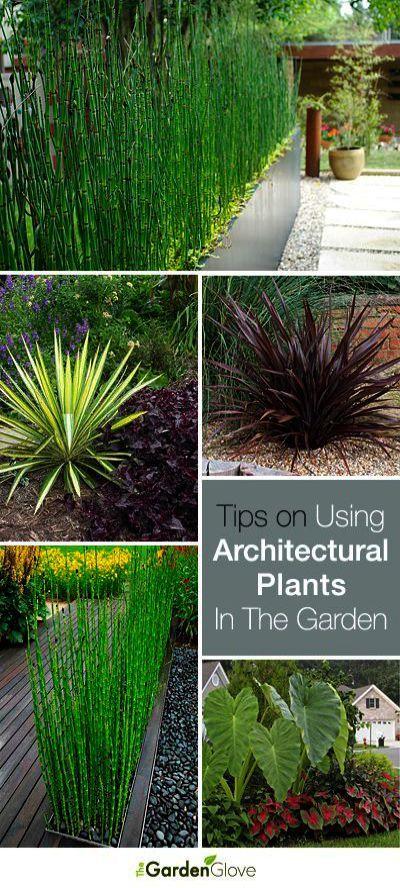Landscape Gardening Norfolk Landscape Gardening And Design With Plants Into Landscape Gardening Liverpool Landscap Architectural Plants Outdoor Plants Plants