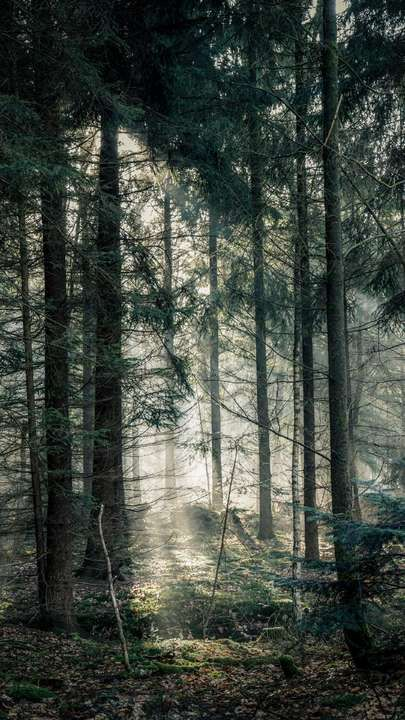 Download Iphone Xs Iphone Xs Max Iphone Xr Hd Wallpapers Forest Fog Trees Branches Light Free Wallpaper Lit Wallpaper Background Scenery Iphone xr wallpaper trees