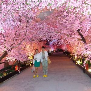 Source Large Outdoor Lighted Cherry Blossom Trees Large Artificial Flower Cherry Blossom Peach Blossom Tree Artificial Cherry Blossom Tree Blossom Tree Wedding