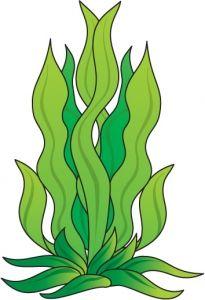seaweed outline vector magz free download vector graphics rh pinterest com seaweed vector image seaweed vector image