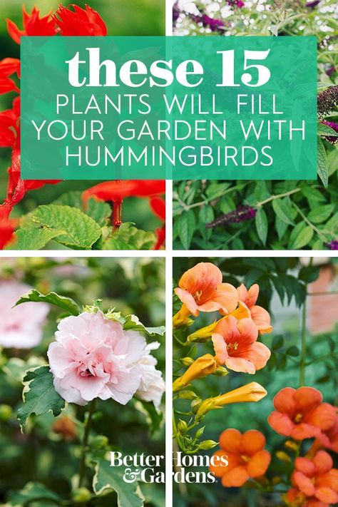 Hummingbirds prefer flowers with a tapered funnel shape that are rich in nectar and color (especially red). Grow as many of these hummingbird favorites as you can to attract the beautiful feathered pollinators to your yard. #gardening #gardenplants #hummingbirds #howtoattracthummingbirds #plantshummingbirdslove #bhg