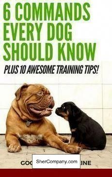 How To Train Your Dog To Stay In An Unfenced Yard Doglovers