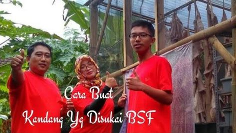 Cara Membuat Kandang Murah dan Yang Disukai BSF - Budidaya ...