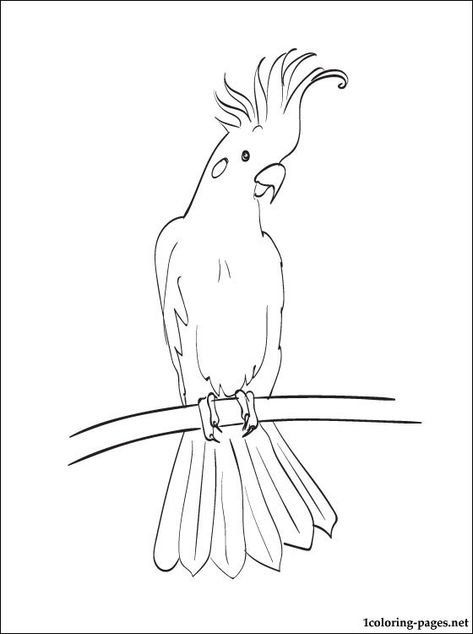 Coloring Page Cockatoo Coloring Pages Bird Drawings Animal