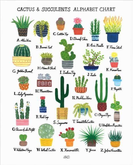 Lily Kao Design Alphabet Print Cactus Succulents Cactus
