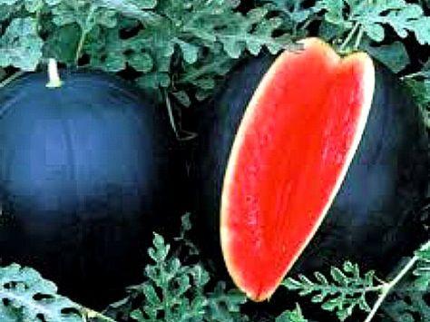 Watermelon Seeds Giant Black Watermelon Bonsai Fruit Plant Sweet Juicy Water Melon Home Garden Bonsai 30 Pcs