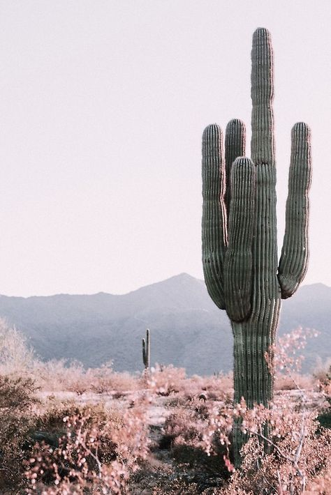'Desert Cactus' Poster by studioseven Bedroom Wall Collage, Photo Wall Collage, Picture Wall, Wall Art, Arizona Cactus, Desert Cactus, Desert Plants, Aesthetic Backgrounds, Aesthetic Wallpapers