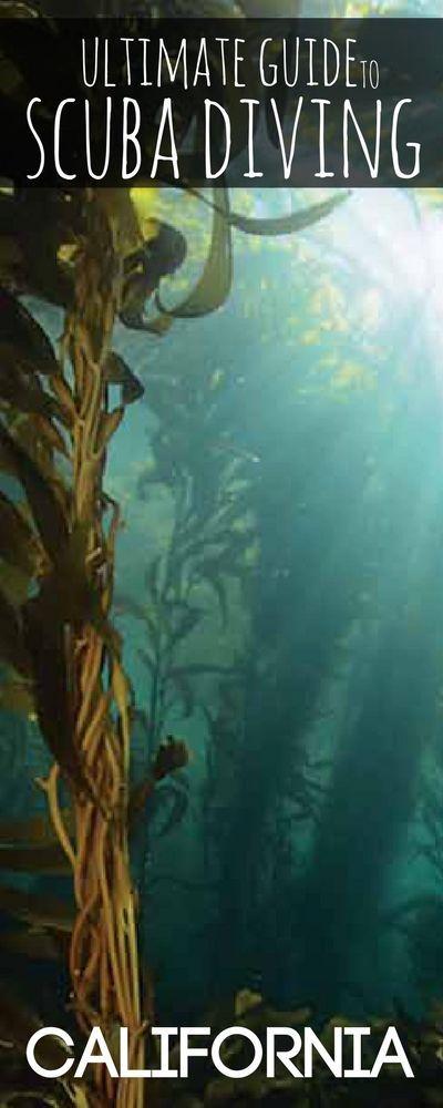 Where To Scuba Dive In California Art Of Scuba Diving Scuba Diving Scuba Diving Quotes Scuba Diving Pictures