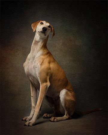Surrey Dog Photographer Madaboutgreys Offers Studio Dog Photography In Richmond And Outdoor Photoshoots F Pet Portraits Photography Dog Photograph Dog Anatomy