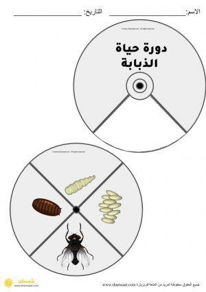 دورة حياة الذبابة دورات حياة الحشرات علوم للأطفال