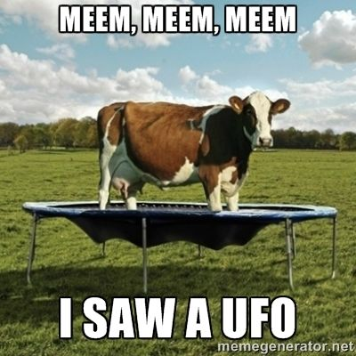 4c4296b0c8fe70b201473ba5281729cf birthday memes advertising ideas cat cow ufo meme google zoeken flying cow pinterest cow,Ufo Memes