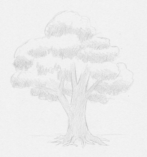 zeichnen lernen  baum laubbaum blätter stamm blattwerk
