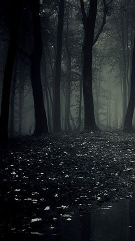 Dark Forest Dark Phone Wallpapers Forest Wallpaper Forest Background