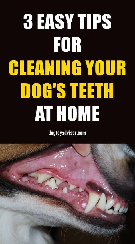 Home Dental Care Is One Of The Best Ways To Help Keep Your Dog S Teeth Clean And Healthy Follow These 3 Easy Tips With Images Dog Teeth Cleaning Dog Teeth Teeth Cleaning