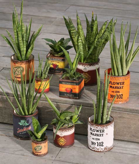 Plantes - Décoration - Déco - Maison - Alinéa | Prendre l\'air ...