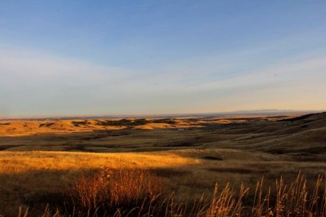 This Montana ranch for sale is one of the state's finest elk hunting properties. Learn more about the Harrison Ranch near Lewistown: http://fayranches.com/ranches-for-sale/montana/harrison-ranch-lewistown-mt