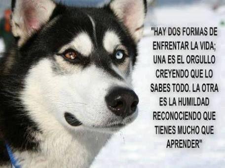 Citas Motivaciones Frases Reflexiones Alcirablog Husky Eyes Husky Siberian Husky Dog