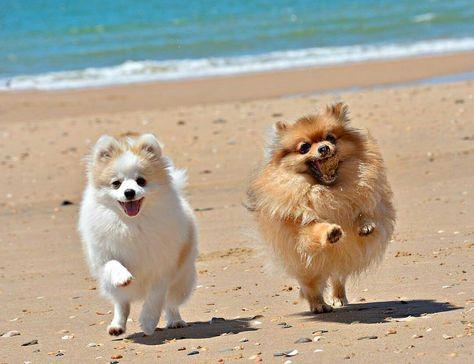 Resultado de imagen para Pomeranian beach  pinterest