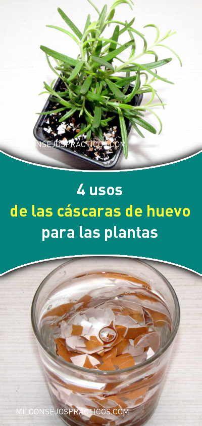 4 Usos De Las Cáscaras De Huevo Para Las Plantas Compost Cactus Plants