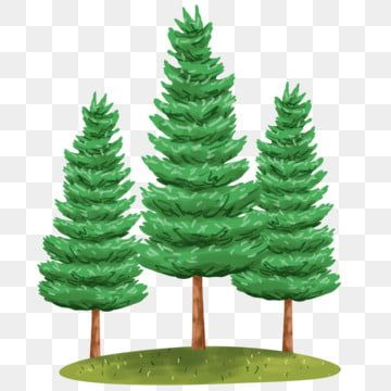 Pine Trees Illustration Pine Tree Nature Png Transparent Clipart Image And Psd File For Free Download Tree Illustration Watercolor Trees Watercolor Background