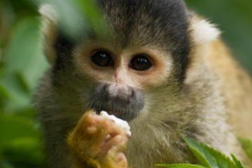 Gatun Lake and Monkey Island Sightseeing Cruise from Panama City