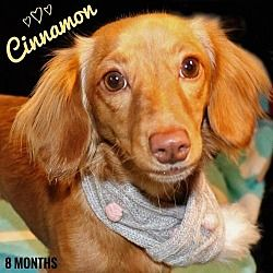 Star Wars Villains Give Rescued Dachshunds A New Hope Star Wars Villains Dog Love Dachshund Rescue