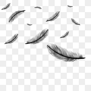 Peacock Feather In 2021 Feather Vector Feather Graphic Feather Background