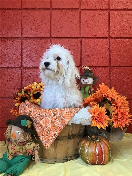 Reeses Allpetsclub Wallingford Ct Adopt Puppies Puppies