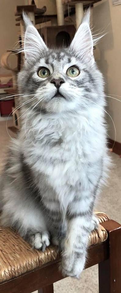 Pin On Cat Crazy