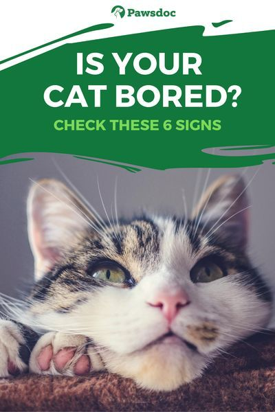 6 Signs Your Cat Is Bored How To Make Your Cat Happy Cat Behavior Cats Cat Facts Funny