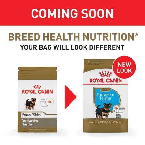 Royal Canin Breed Health Nutrition Yorkshire Terrier Puppy Dry Dog Food 2 5 Lbs