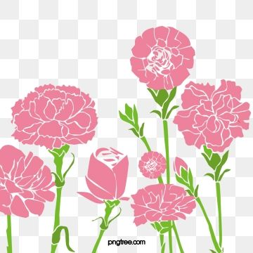 Carnation Flowers Carnations Flowers Mother S Day Png Transparent Clipart Image And Psd File For Free Download Flower Graphic Carnation Flower Flower Graphic Design
