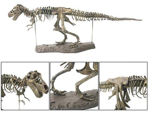 Esqueleto Tiranosaurio Rex Modelo Para Armar Esqueleto