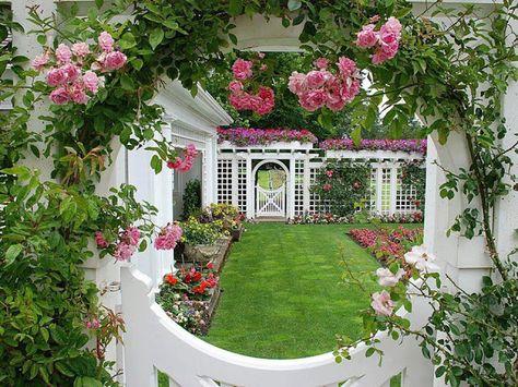 Puteri Manja Pokok Bunga Ros Taman Indah Pertamanan Belakang Rumah Bunga Bunga Indah
