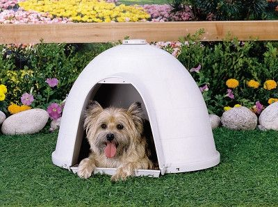 Petmate Dogloo Xt Dog House Medium Products Igloo Dog House