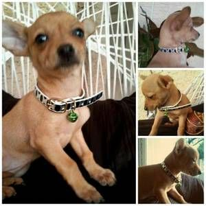 Imagenes De Pets For Sale Phx Az Craigslist