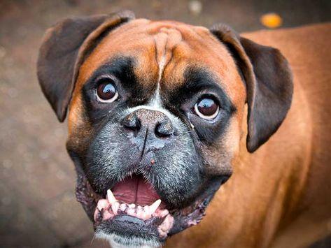 Hunde Fur Anfanger Das Sind Die 13 Besten Anfangerhunde Mit Bildern Hunde Hunderassen Hunde Rassen