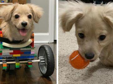 الفنان الياباني تحول صور الحيوانات المحرجه الى منحوتات فرحانه 30 Pics Reali Ritual Dogs Your Pet Pets
