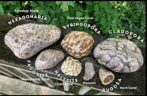 We specialize in Petoskey Stone Drawer pulls and other unique gifts made from the Rocks and Minerals that make up Northern Michigan Stone Crafts, Rock Crafts, Minerals And Gemstones, Rocks And Minerals, Michigan Travel, Lake Michigan, Petoskey Michigan, Wisconsin, Rock Identification