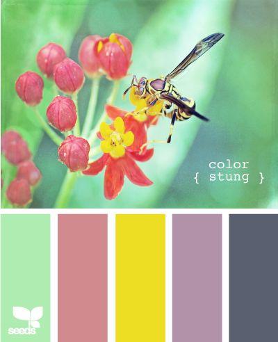 color stung