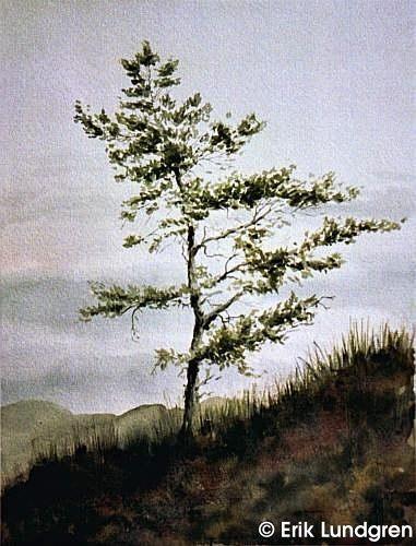 artist Erick Lundgren watercolor Ensamt träd