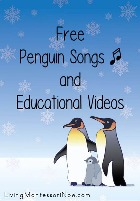 Lots of free penguin songs and educational videos for a variety of ages; perfect for a penguin or Antarctic unit at home or in the classroom - Living Montessori Now Preschool Songs, Preschool Lessons, Where Do Penguins Live, Penguin Songs, Tacky The Penguin, School Themes, Winter Theme, Winter Art, Educational Videos