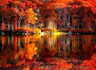 Hd Fall Scenery Wallpapers In 2020 Scenery Wallpaper Desktop Wallpaper Fall Desktop Wallpapers Backgrounds