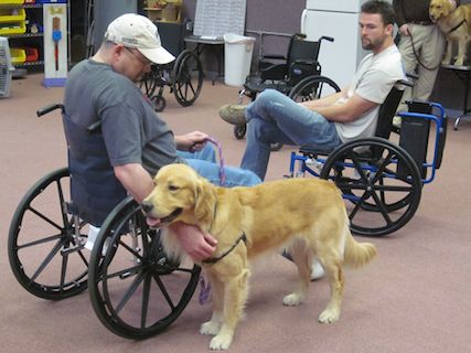 Dogs Helping Veterans Program Working To Help Veterans Living
