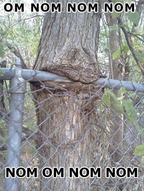 Tree Revenge....