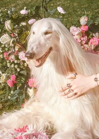 """midnight-charm: """"Gucci celebrates the year of the dog Photography by Petra Collins Art Director: Christopher Simmonds """" Pink Nature, Petra Collins, Dog Years, Dog Photography, Chinese New Year, Aesthetic Pictures, Beautiful Creatures, Puppy Love, Cute Dogs"""