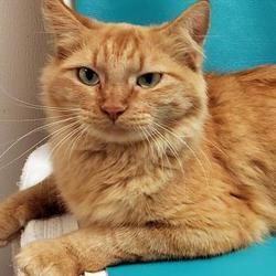 Pet Card Cat Adoption Cat Sweaters Cats