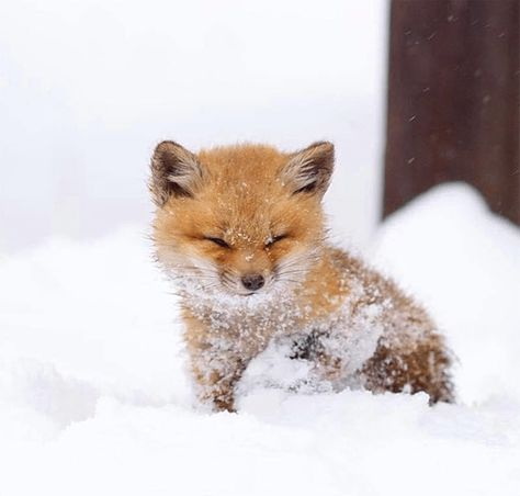 Cute Baby Animals That Will Make You Go 'Aww' - Top5