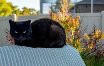 Boards History Rinda Beach Blog Rinda Beach Cat Names Black Cat Male Black Cat Names